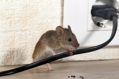 Pest Control in Kensington, W8. Call Now! 020 8166 9746