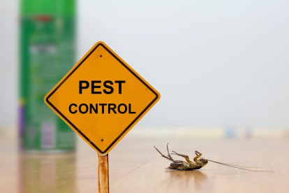 Pest Contol in Kensington, W8. Call Now 020 8166 9746