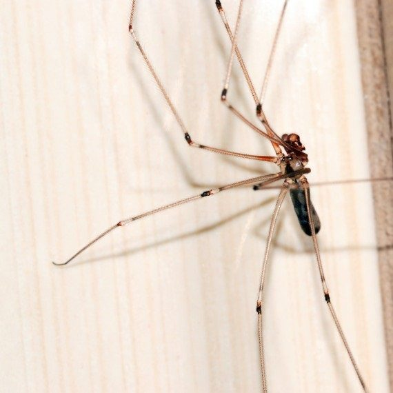 Spiders, Pest Control in Kensington, W8. Call Now! 020 8166 9746